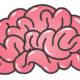 Ditch These 6 Brain Myths